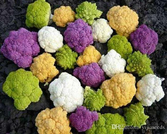 30/ BAG Cauliflower seeds yellow black purple green cabbage seeds vegetable sementes seeds for home garden