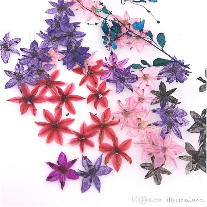 Small star shaped special pressed flowers raw material mini dried small star shaped special pressed flowers raw material mini dried flowers for wall painting decoration free shipment diy pressed flowers small dried mightylinksfo