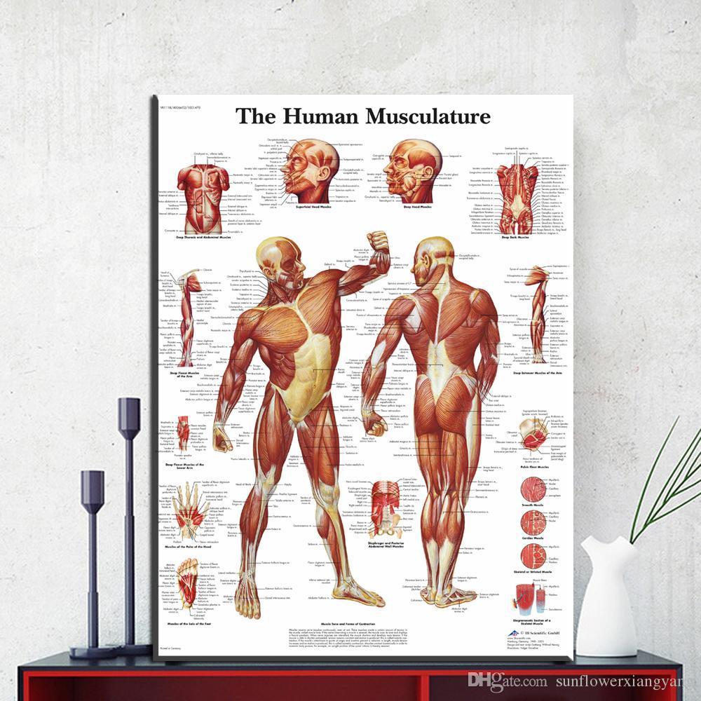 Satın Al 1 Panel Insan Vücudu Anatomisi Tuval Sanat Baskı Boyama