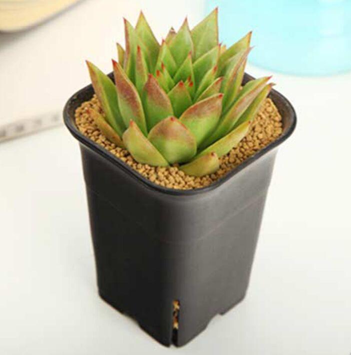 4 size option square nursery plastic flower pot for indoor home desk, bedside or floor, and outdoor yard