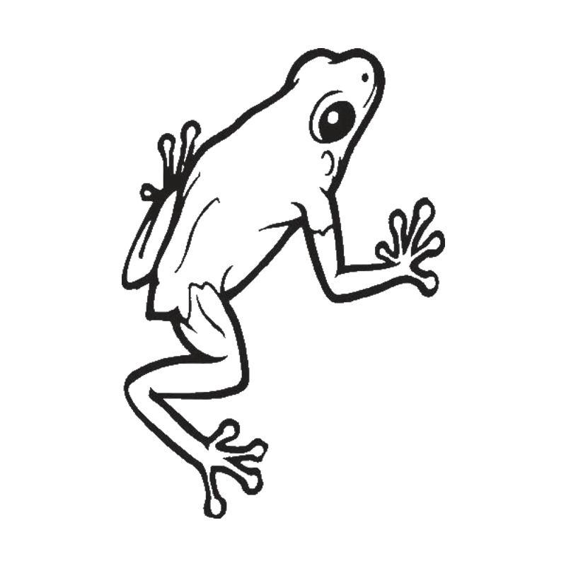 2019 Frog Cute Car Decal Sticker Vinyl Stickers Gym Home Decor