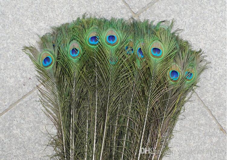 Feather Peacock COLAS 10