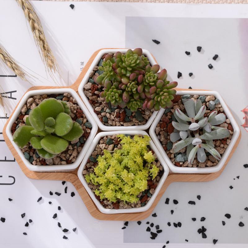 Of Modern Hexagon Flowerpots White Ceramic Succulent Plant Pot With