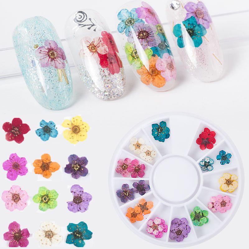 Wheel Real Natural Dried Dry Nail Art Flower Tips 3d Diy Uv Gel Nail