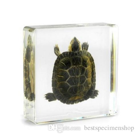 Tortoise Biology Specimen Acrylic Resin Embedded Tortoise Teaching Kits Transparent Mouse Block Student New Science Learning&Education Tools