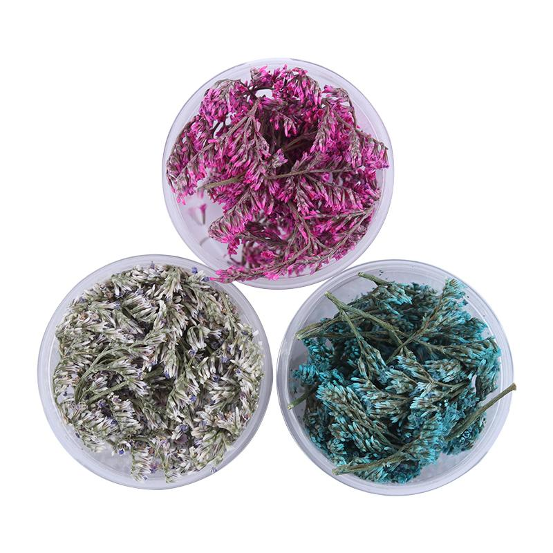 1 Box Sea Lavender Dried Flowers Nail Art Diy Preserved Flower With ...