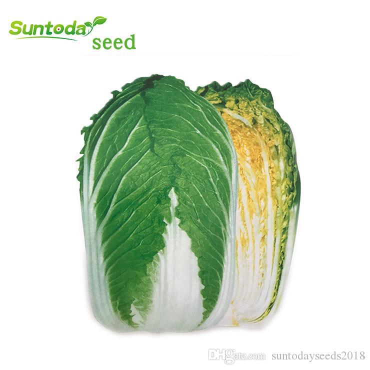 Suntoday Chinese Cabbage Pickle Bok Choy Pakchoy Brassica 65 Days Seeds Asian Garden Plant Hybrid Non-GMO Organic Fresh Seeds