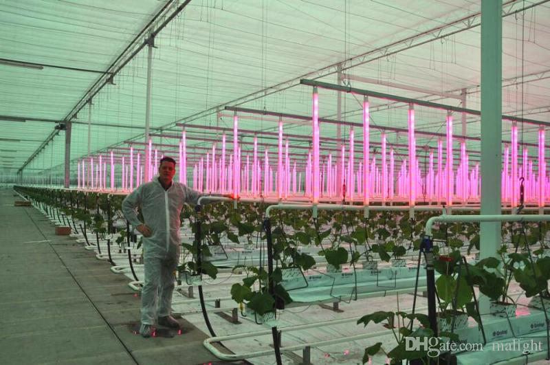 New Design Indoor Large-Scale Planting Area LED Grow Light Full Spectrum Greenhouse Grow Lighting 144w for Greenhouse Medicine Hemp Planting