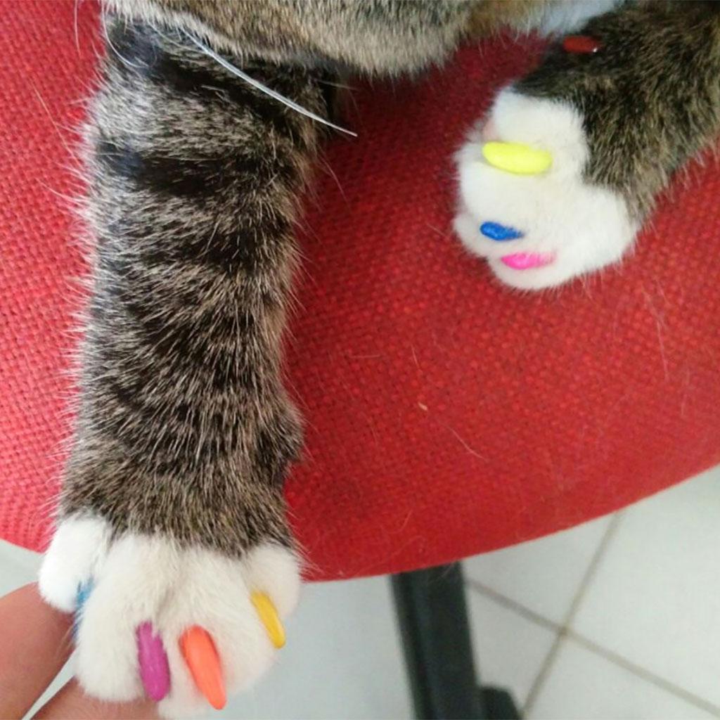 Tapas de uñas suaves Tapas de uñas Tapas de garra Cubiertas de pata para gato Gatito de mascota con garras de pegamento Patas de control desactivadas