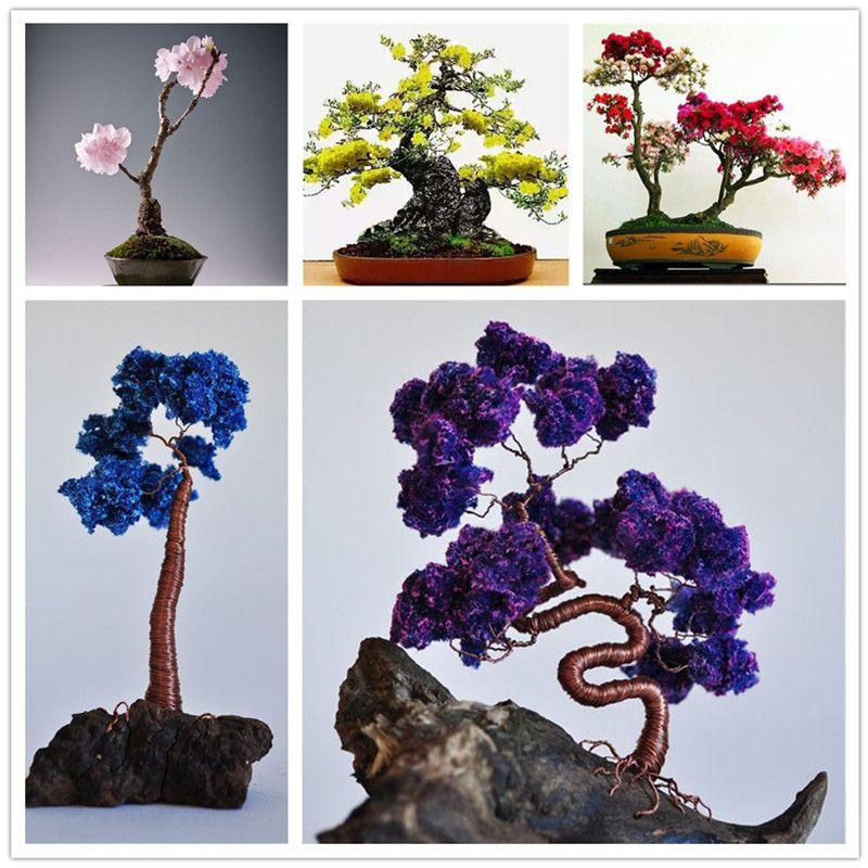 2018 Hot Sale Mini Bonsai Tree Japanese Sakura Seeds,Bonsai Flower Cherry  Blossoms Home Graden Decoration From Ymhzpy, $1.26 | Dhgate.Com