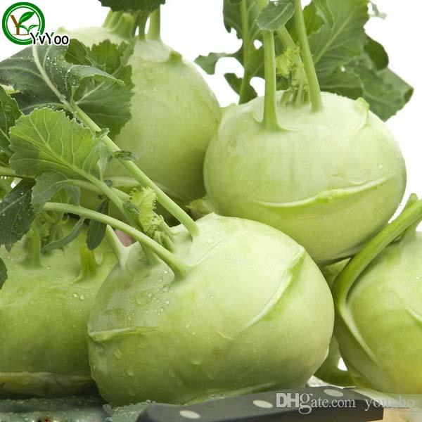 Kohlrabies Seeds garden plants Bonsai organic fruit and vegetable seeds
