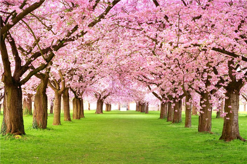 2019 Pink Cherry Blossom Trees Wedding Floral Backdrops Photography