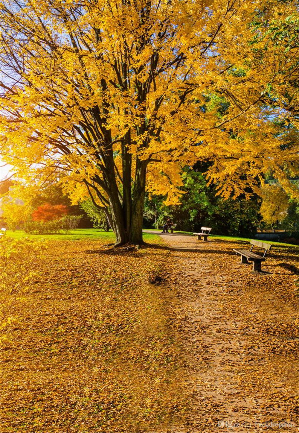 2019 park autumn scenic photography background yellow tree fallen