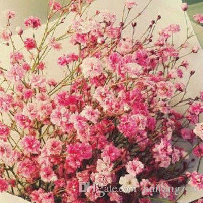 Hot Selling Colorful Babysbreath Flowers Seeds Plant/Garden Beautiful Plants seeds Plantlet Garden Home Fragrant Wedding Accessories