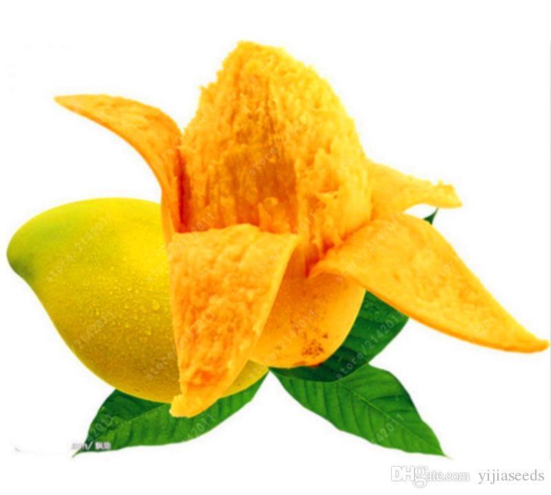 2 pezzi / borsa semi di mango, mini semi di albero di mango, semi di albero bonsai, semi di frutta e verdura biologica, vaso la casa piantare giardino