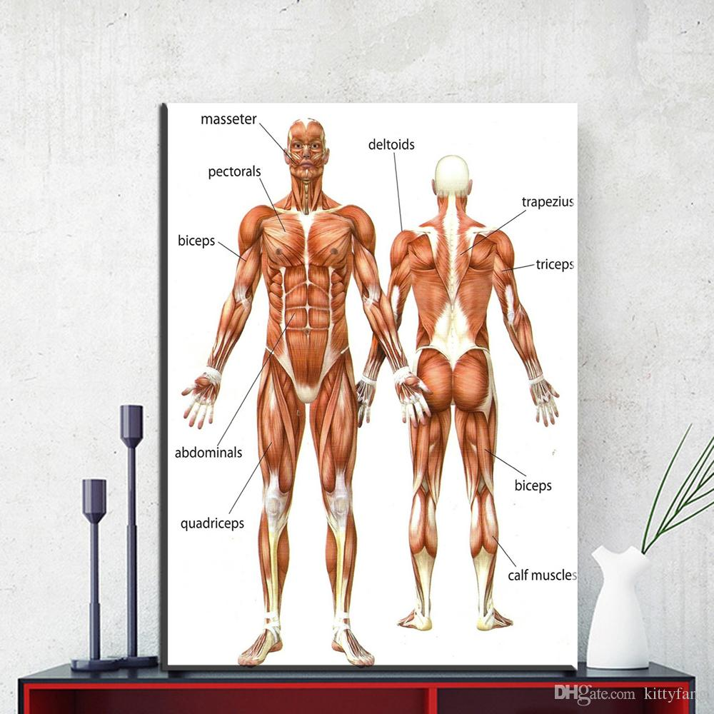 2019 1 Panel Canvas Painting Wall Art Picture Human Anatomy Muscles