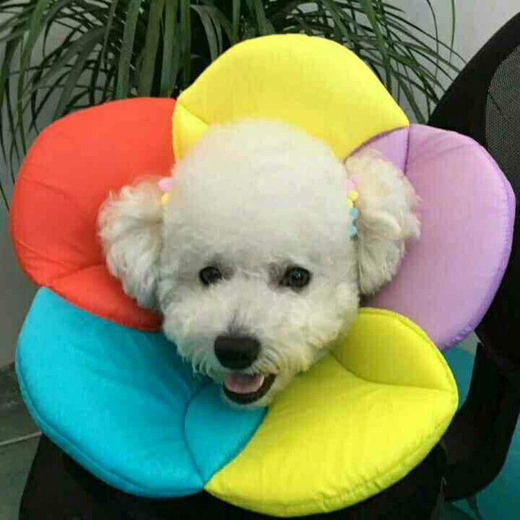 6 Farben Fabrik Blumenmuster Haustier Katzen Hunde Elizabethan Kragen Recovery Pet Cone Schutzhülle Elizabeth Kragen