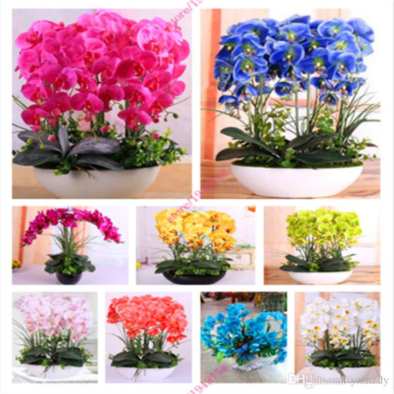 2018 Mixed Chinese Cymbidium Orchid Flower Seeds Indoor Potted ...