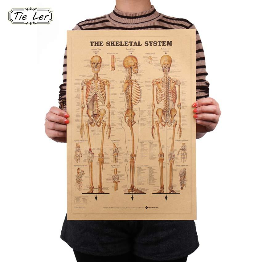 Tie Ler The Skeleton Of The Body Structure Nervous System Poster Bar