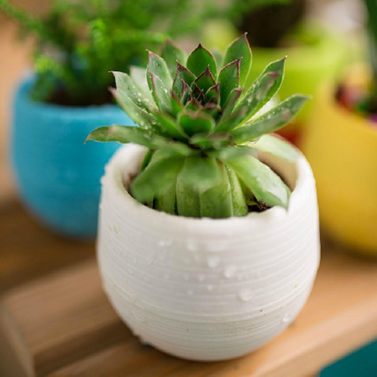 Flower Pots Mini Flowerpot Unbreakable Plastic Nursery Pots Adorable Afforest Aid Good Helper use for garden