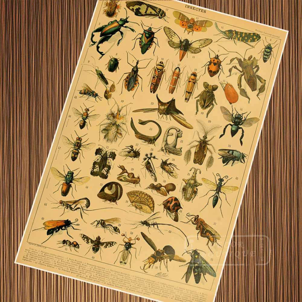 Vintage Insects Watercolor Encyclopedias Illustration Retro Poster ...