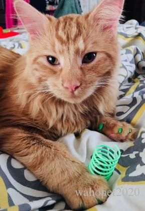 الحيوانات الأليفة على نطاق واسع دائم الثقيلة البلاستيك الينابيع القط لعبة القط لعب اللعب للقط