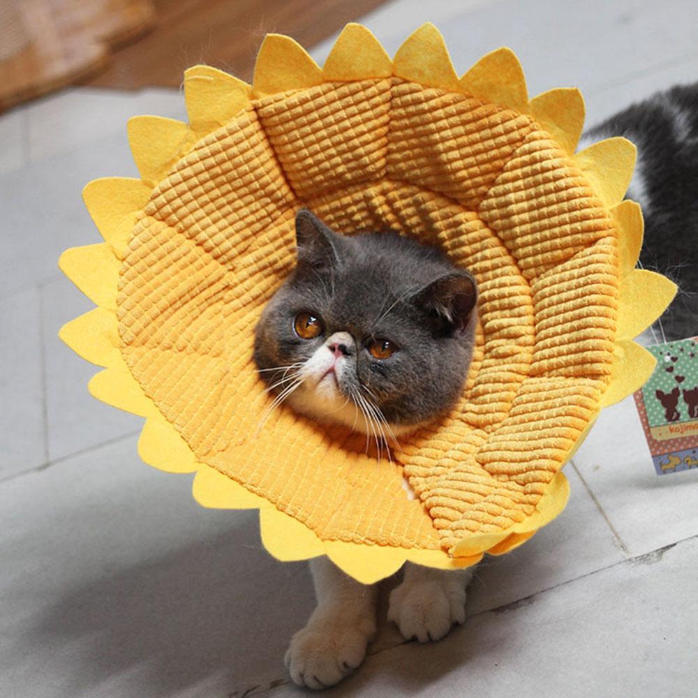 Satın Al Karikatür Ayçiçeği Pet Elizabeth Daire Köpek Koruyucu