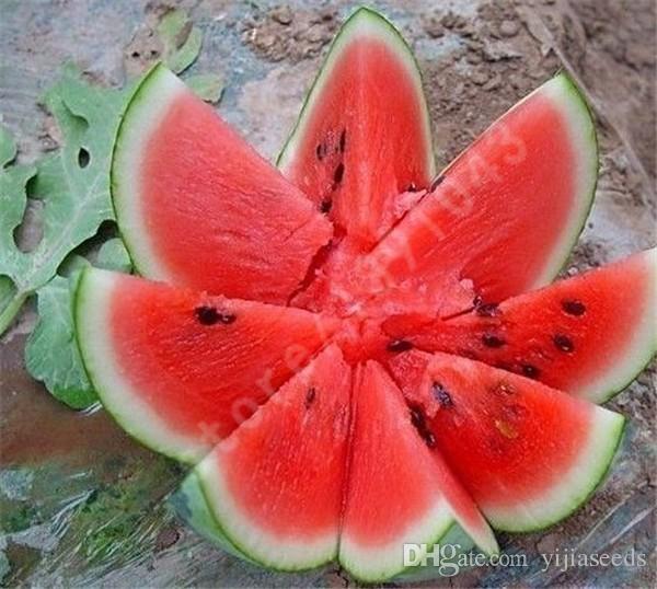 Nouvelles graines 2017! 30 pièces graines de melon d'eau commune délicieux fruits chinois graines de melon d'eau Bonsaï plantes semences, # 1ELH5X