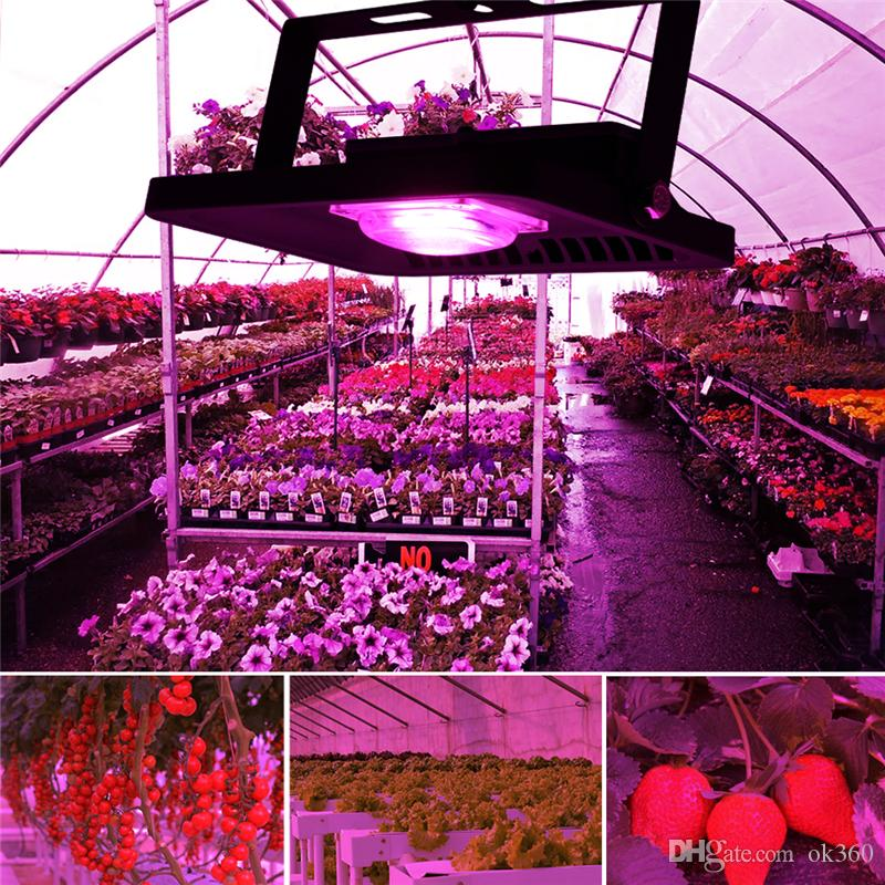 IP65 LED COB Flood Light 100W 50W 30W 220V Input Smart IC Driver Full Spectrum Fruit Flower Cultivate Plant Lamp DIY Grow Light