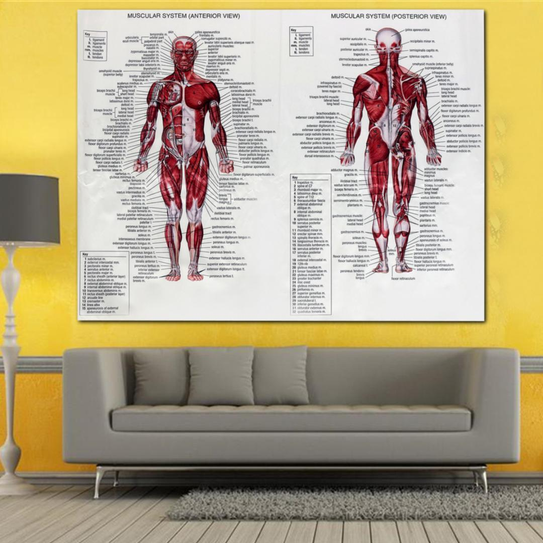 2018 60x80cm Muscle System Poster Silk Fabric Anatomy Chart Human