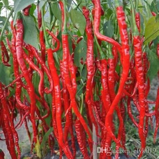 1 Original Pack 30 Seeds red peppers, New Spices Spicy Chili Pepper vegetables Seeds