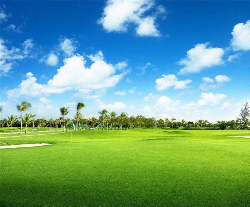 /bag special grass seeds , Lawn Grass Seeds evergreen perennial grass seeds for garden football and golf place