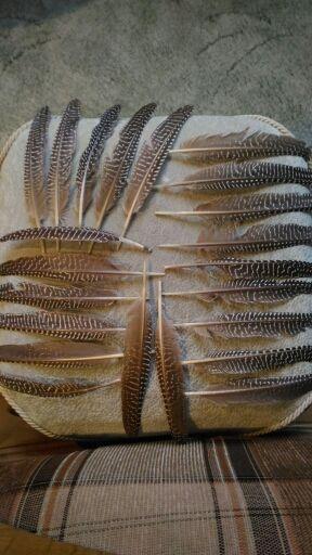 hermosa pluma de gallina de Guinea natural 12-17 cm / 5-7 pulgadas decorativa diy plumas de la decoración del partido 10 unids / lote