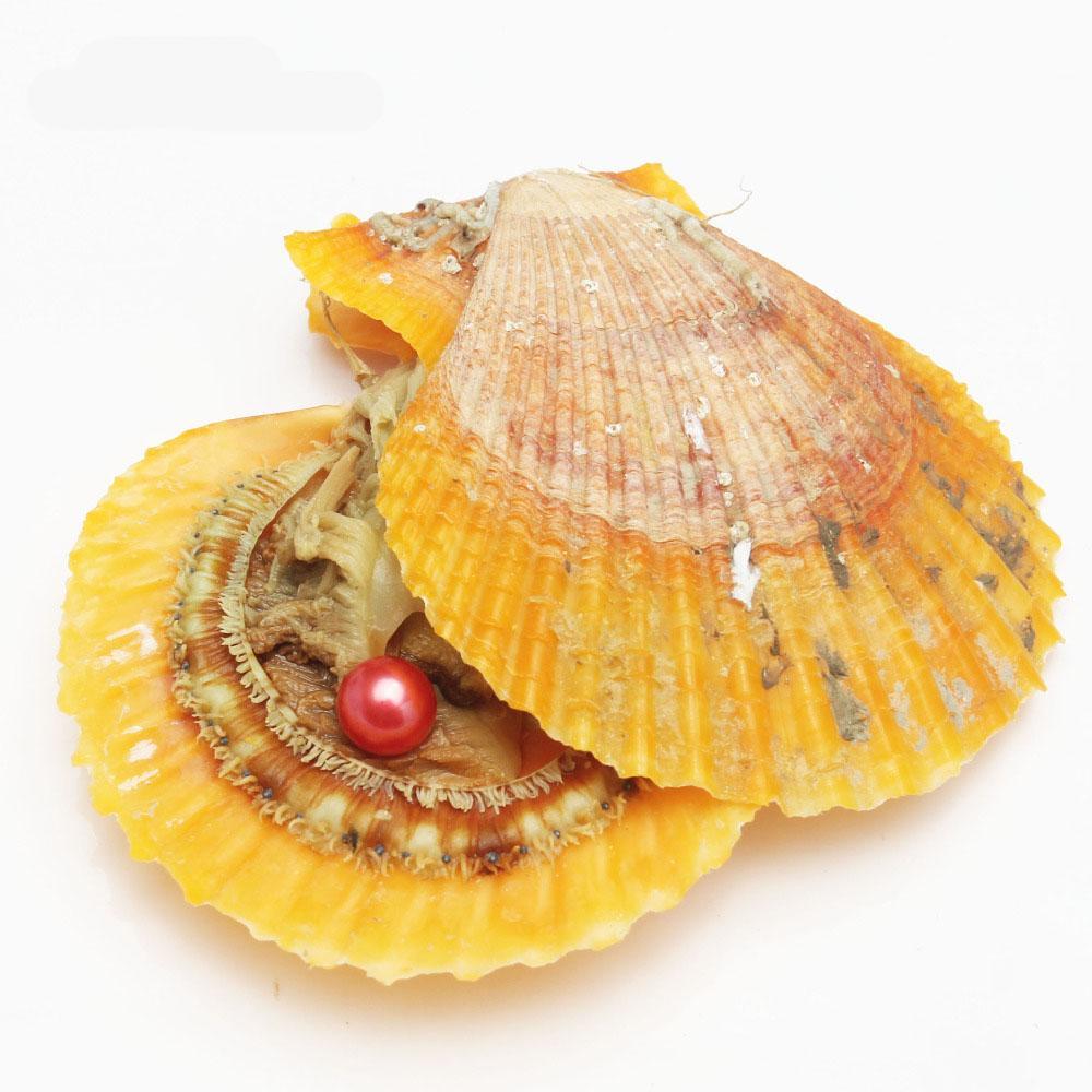 2018 Akoya Red Shell 6-8mm Runde Perle Vielzahl von Farbe Liebe Wunsch Pearl Meerwasser Austern Individuell Vacuum Pack Fashion Trend Geschenk