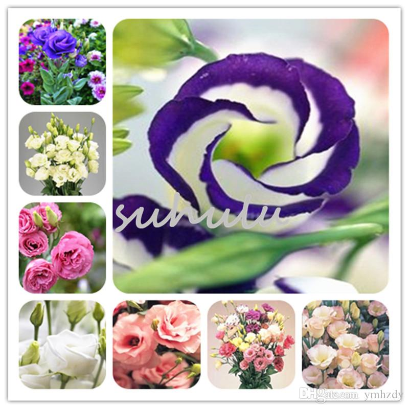 100 Pcs Bonsai Green Eustoma Flower Beautiful Mixed Color Lisianthus Potted Plants Flowers For Home Garden Planting Home & Garden Garden Supplies