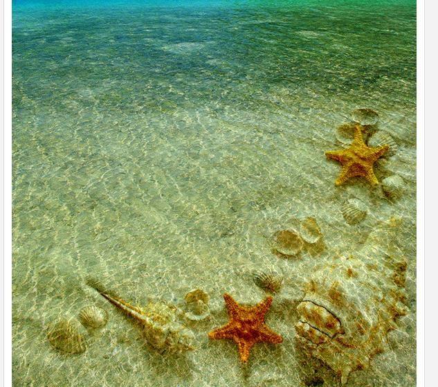 Satın Al Modern Zemin Boyama Kabuklu Denizyıldızı Temizle Deniz Suyu