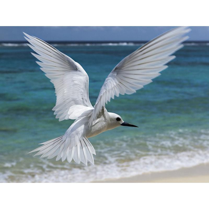 Satın Al Deniz Beyaz Güvercin çapraz Dikiş Elmas Nakış Ev