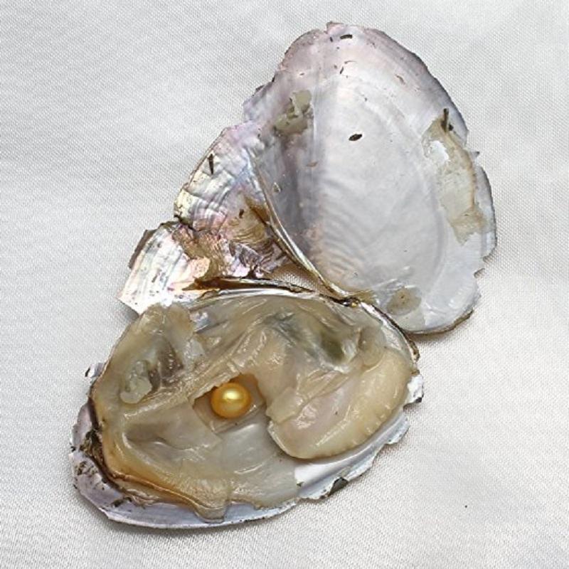 Runde Auster-Perle 6-8mm 2018 neues 20 Mischungsfarbe großes Süßwasser-Geschenk DIY natürliche Perlen-lose Korn-Dekorationen Vakuumverpackungs-Großverkauf