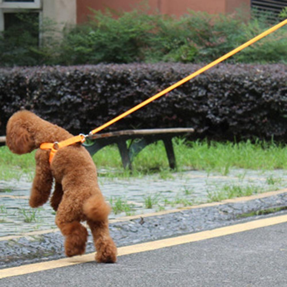 Yeni Naylon LED Köpek Harness Pet Kedi Köpek Yaka Koşum Yelek Güvenlik Işıklı Köpek Koşum Küçük / Büyük / Büyük Boy Toptan