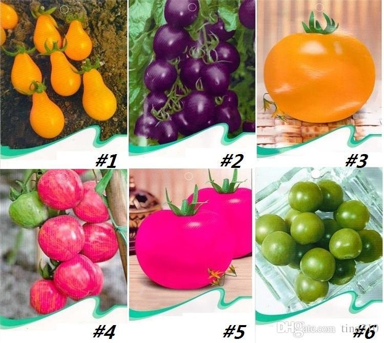 Nuovi semi di pomodoro arcobaleno, semi di pomodoro rari, semi di frutta verdura biologica bonsai, piante in vaso giardino domestico I185