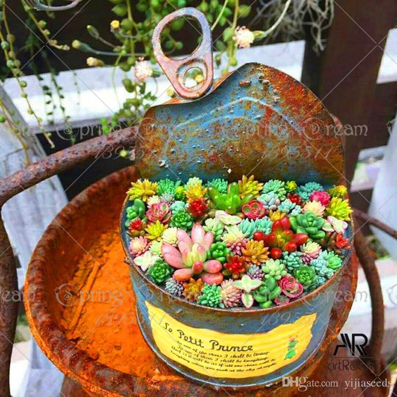 30 pz / borsa Real mini succulente semi di cactus rare succulente piante erbacee perenni bonsai vaso di fiori semi di piante al coperto la casa
