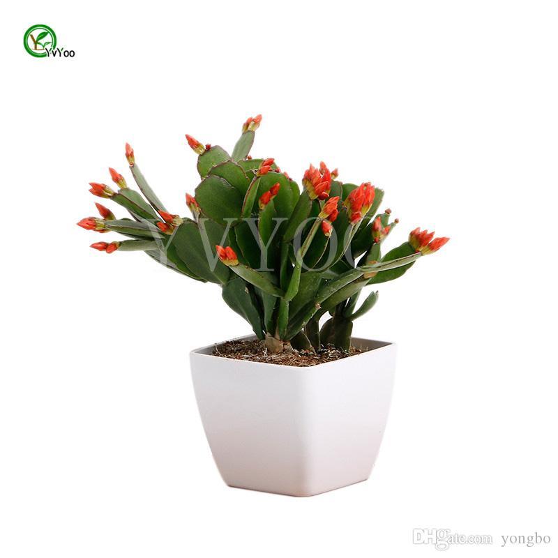 Balcone semi invasatura Cina Cactus Semi Albero In Vaso Bonsai Cortile Casa Giardino Bonsai Pianta 30 pz T035