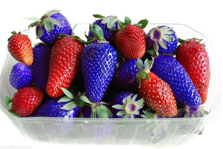 Newest Fruit Seeds Blue Strawberry Seeds DIY Garden Fruit Seeds Potted Plants Garden Supplies I181