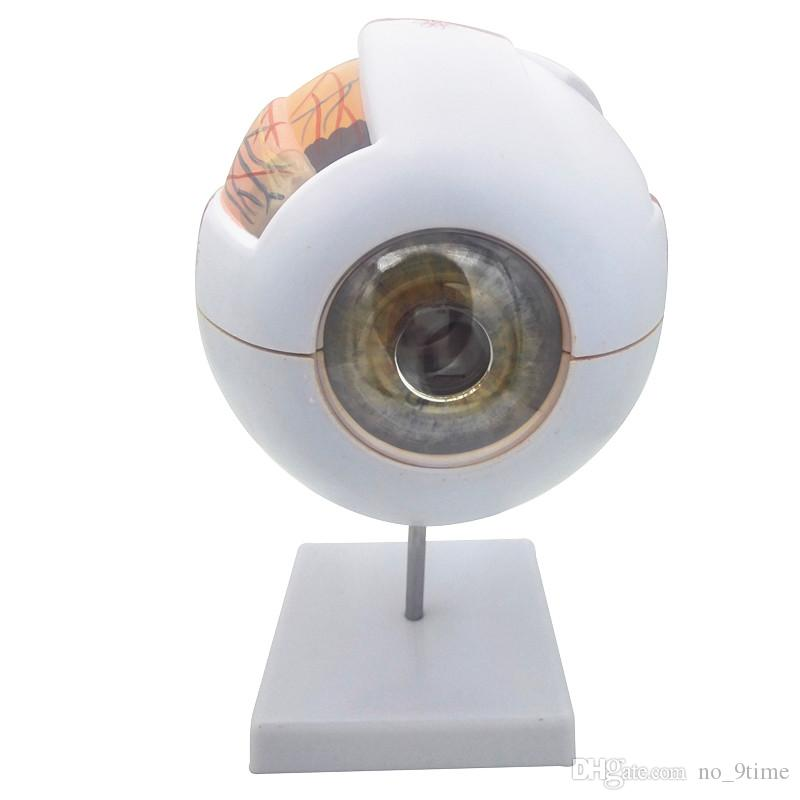 6x Giant Eye Anatomical Model Large Eyeball Structure Model Teaching
