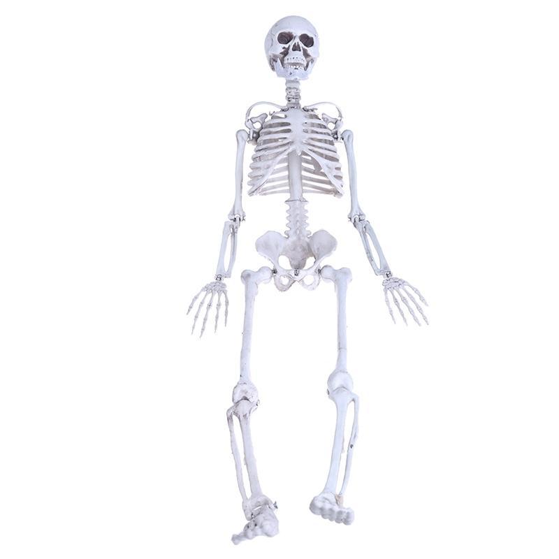 2018 Human Medium Skull Full Body Anatomical Model For Halloween ...