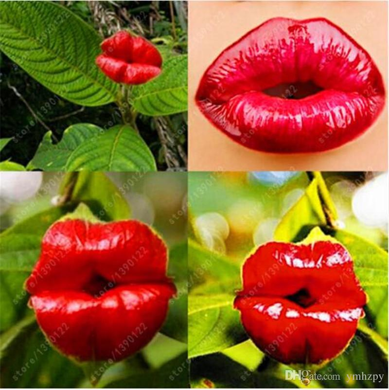 2018 Red Lips Flower Seeds Rare Flower Pots Garden Flowers Seeds Park Yard  Plant Psychotria Elata Seeds For Home Garden /Bag From Ymhzpy, $1.71 |  Dhgate.Com