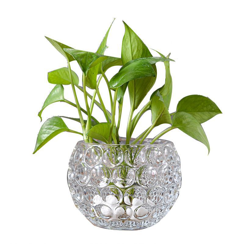 Household Decor Glass Vase Micro Landscape Jardiniere Creative