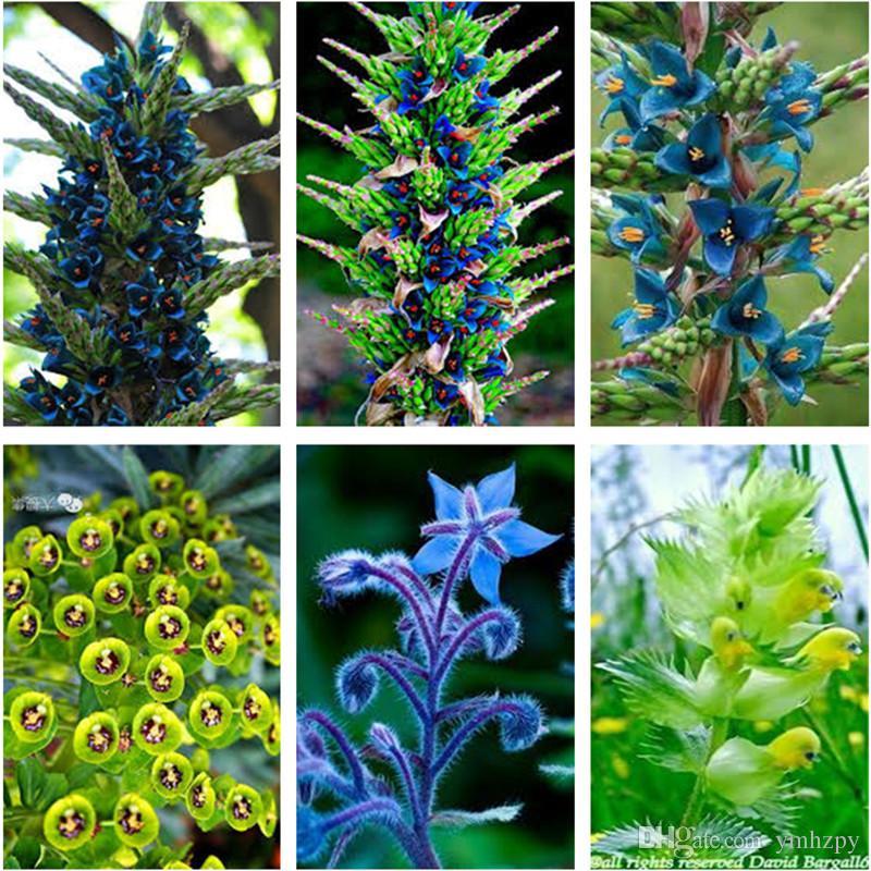 Acheter Vente Chaude Rare Phalaenopsis Graines, Cymbidium Orchidée ...
