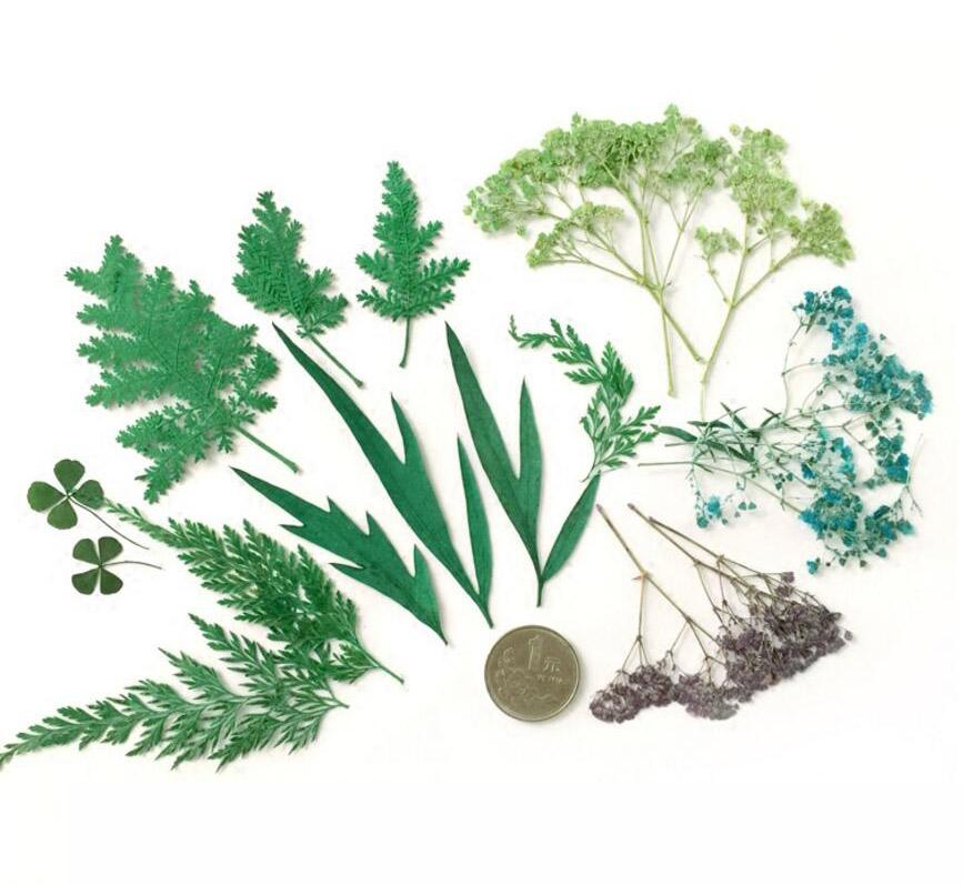 100pcs-mixed-pressed-dried-green-leaf-le