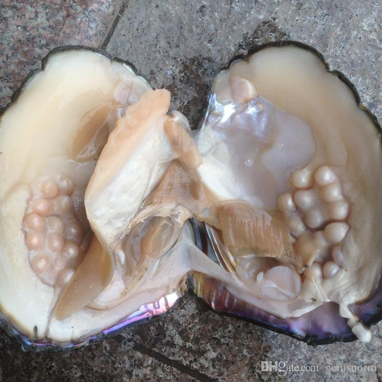 2018 Party Fun Freshwater Pearls Shells Vacuum Packaging Real Natural Pearl Oysters Big Monster Oysters Gift BP011